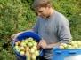 Apfelpflücken 2006